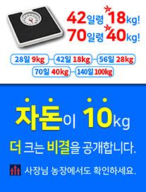42일령 18kg! 70일령 40kg! 28일 9kg - 42일 18kg - 56일 28kg - 70일 40kg - 140일 100kg 자돈이 10kg 더 크는 비결을 공개합니다. 사장님 농장에서도 확인하세요. 에이티면역사료